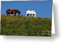 Brown And White Horse Grazing Together In A Grassy Field Greeting Card