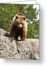 Brown Bear 3  Greeting Card