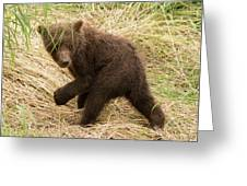 Brown Bear Cub Turns To Look Back Greeting Card