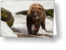 Brown Bear Eating Salmon Tail Beside Rocks Greeting Card