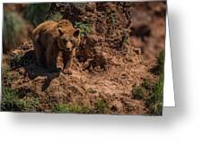 Brown Bear Watches From Steep Rocky Outcrop Greeting Card