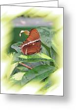 Brown Beauty Greeting Card