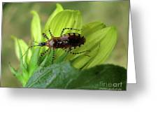 Brown Insect Greeting Card