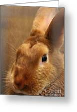 Brown Bunny And Whisker's Closeup Greeting Card