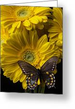 Brown Butterfly On Yellow Daisies  Greeting Card