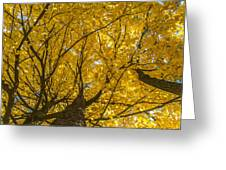 Brown County Colors Greeting Card