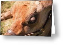 Brown Cow 2 Greeting Card