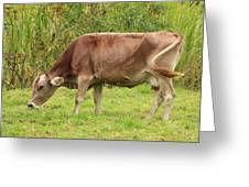 Brown Cow Grazing Greeting Card