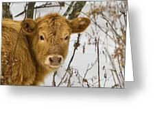 Brown Cow Greeting Card by Ken Barrett