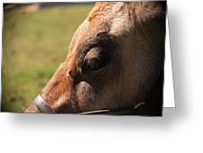 Brown Cow With Vignette Greeting Card
