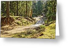 Brown Dirty Road Under Spring Sun Rays Greeting Card
