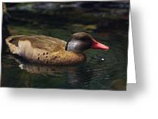 Brown Duck Greeting Card