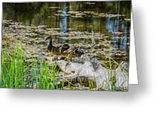 Brown Ducks On Log Greeting Card