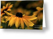 Brown Eyed Susan Greeting Card