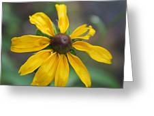 Brown-eyed Susan Greeting Card