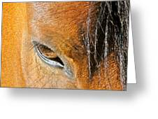 Brown-eyed Wild Horse Greeting Card