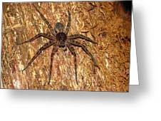 Brown Fishing Spider Greeting Card