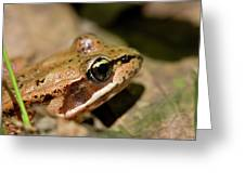 Brown Frog In The Forest - Western Oregon Greeting Card