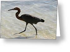 Brown Heron Greeting Card