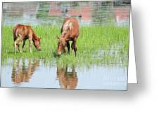 Brown Horse And Foal Nature Spring Scene Greeting Card
