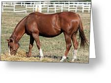 Brown Horse Eat Ranch Scene Greeting Card