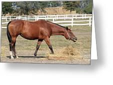 Brown Horse Eating Hay Ranch Scene Greeting Card
