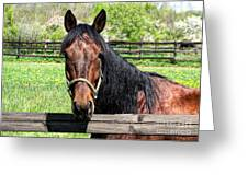 Brown Horse In A Corral Greeting Card