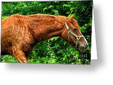 Brown Horse In High Definition Greeting Card