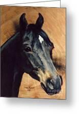 Brown Horse  Tingeys Star Greeting Card
