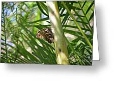 Brown Morpho Butterfly Resting On A Sunny Tree  Greeting Card