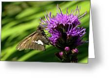 Brown Moth On Pink Greeting Card