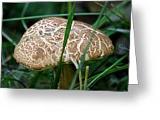 Brown Mushroom Squared Greeting Card
