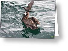 Brown Noddy Atop Pelican Scouts Dinner Greeting Card