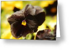 Brown Pansy Greeting Card