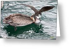 Brown Pelican And His Friend Brown Noddy Greeting Card