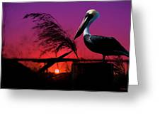 Brown Pelican At Sunset - Painted Greeting Card