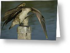 Brown Pelican At The Dock Of The Bay Greeting Card