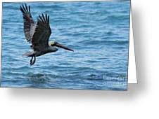 Brown Pelican In Flight Over Water Greeting Card