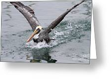 Brown Pelican Landing On Water . 7d8372 Greeting Card
