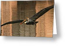 Brown Pelican On A Sunset Flyby Greeting Card