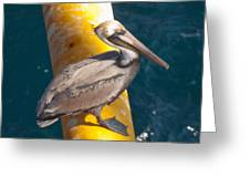 Brown Pelican On Platfrom Greeting Card