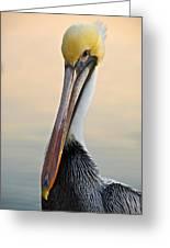 Brown Pelican Portrait Greeting Card