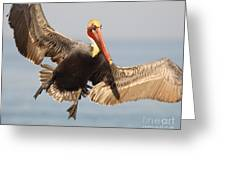 Brown Pelican Putting On The Brakes Greeting Card