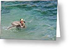 Brown Pelican Greeting Card