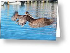 Brown Pelican Taking Flight Greeting Card