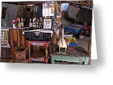 Brown Pelican Visiting Mexican Beach Bar Greeting Card
