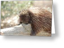 Brown Porcupine On A Fallen Log Greeting Card