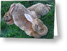 Brown Rabbits Greeting Card