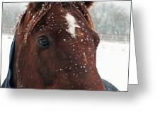 Brown Snow Horse Greeting Card