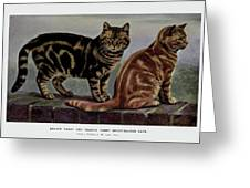 Brown Tabby And Orange Tabby Greeting Card